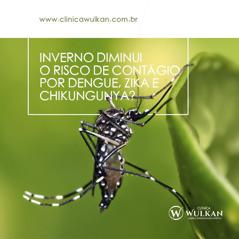 Dengue, zika e chikungunya, no inverno?