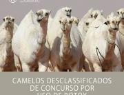 Camelos desclassificados de concurso por uso de botox