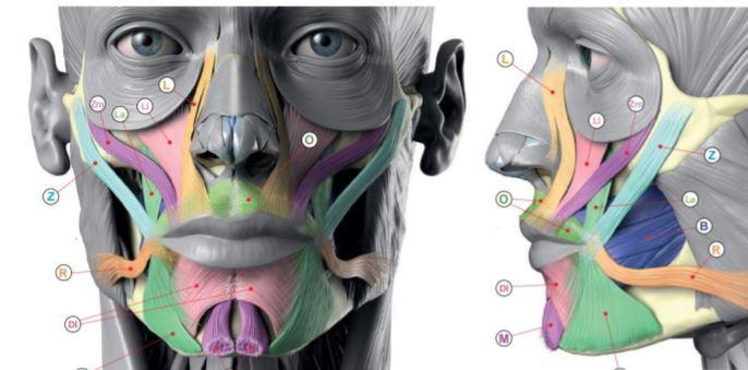 como funciona a harmonizacao facial
